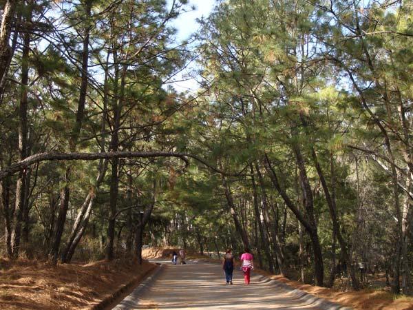 Bosque-Los-Colomos