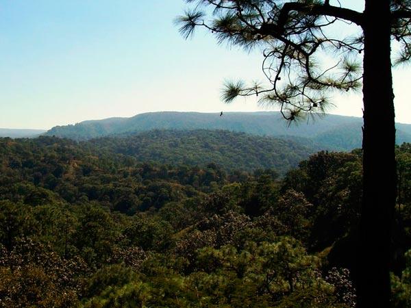 Bosque-de-La-Primavera