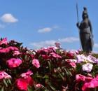 Ciudad de las Rosas 140x130 ¿Por qué Guadalajara es la Ciudad de las Rosas?