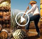 Elaboracion-del-tequila