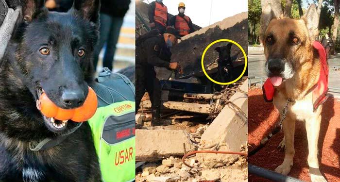 Perros rescatistas de Jalisco
