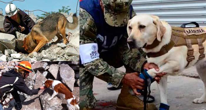 Perros rescatistas: Los nuevos héroes nacionales en México
